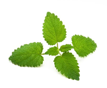 lemon balm, isolated on white    Zitronenmelisse Stock Photo