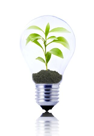 eco concept: lightbulb with young plant inside Stock Photo - 5114663