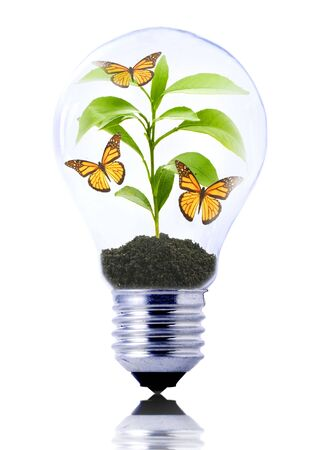 eco concept: lightbulb with young plant and butterflies inside  Stock Photo - 5114515