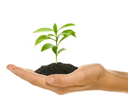 Young plant in females hand - starting up concept