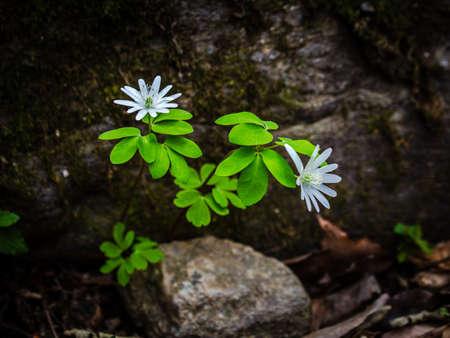 Wildflower in Hwayasan Stock Photo
