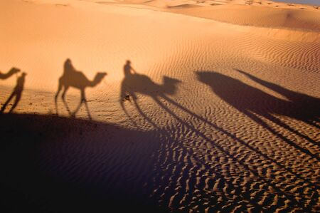 Shadow of camel caravan in desert Sahara Stock Photo - 1298197