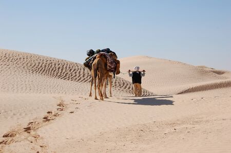 bedouin: bedouin and camel caravan in desert Sahara