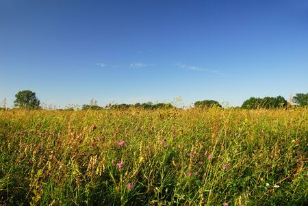 meadow view, flowers and blue sky Stock Photo - 2112627