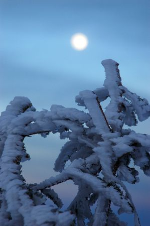 Frozen tree branch and moon Stock Photo - 2114384