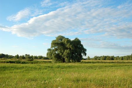 Single tree in the meadow Stock Photo - 2163276