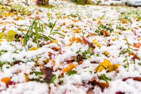 the first snow on the green grass and fallen red and yellow leaves