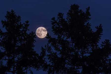 the full moon in the pines