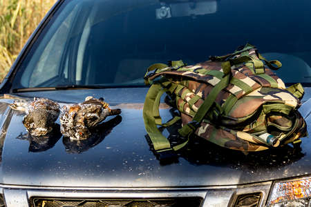 backpack and grouse lie on the hood of the car