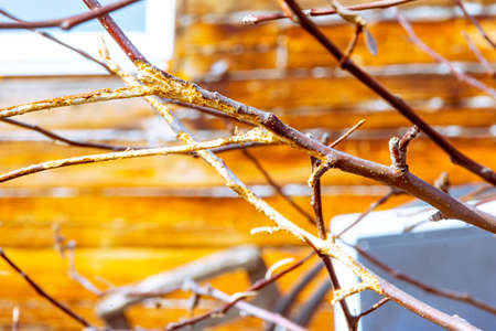 rodent damage to fruit trees during winter, selective focus