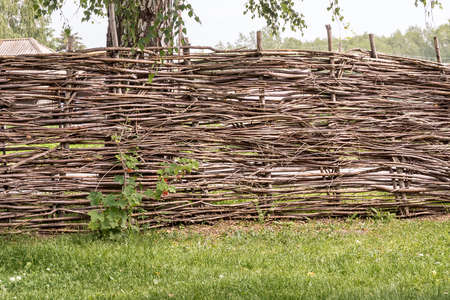in village high wicker fence in traditional style next to a bush of red currant, behind a fence a birch, selective focus Stock Photo