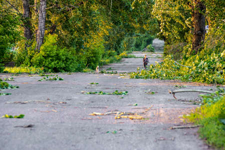 large branches of trees and foliage lie on the roadway, through these piles go a teenager and a dog, selective focus