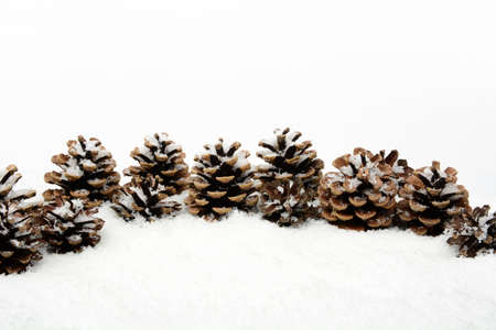 gewgaw: Decoration of pine cones  in line on snow on white background