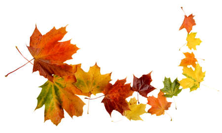 whiff: Autumn leaves during blizzard isolated on white background