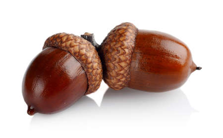 glands: Couple of glands,acorns isolated on white background