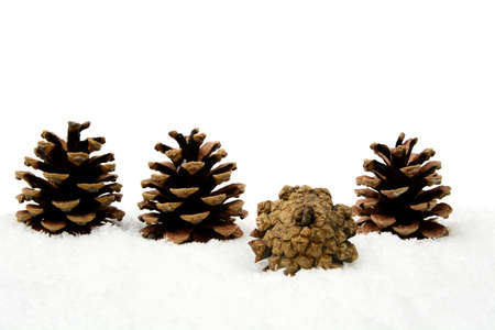 festive pine cones: Decoration of four pine cones in line on snow on white background