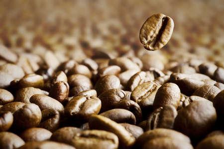 large bean: Macro shot of coffee bean thrown in coffee beans dark background