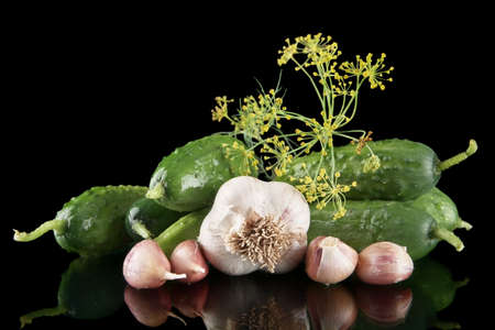 pickling: Gherkins preparate for pickling with leaves,garlic,dill and tendrils isolated on black background