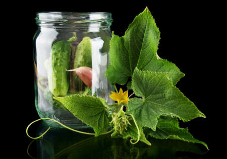 pickling: Gherkins in jar preparate for pickling with flower bud leaves, jar, garlic, dill flowers and tendrils isolated on black background