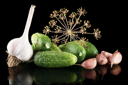 gherkins: Gherkins preparate for pickling with leaves,garlic,dill and tendrils isolated on black background