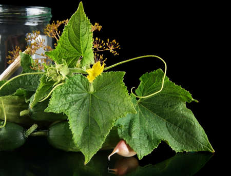 cropped shots: Cropped shot of cucumbers in jar preparate for pickling with flower bud,leaves,jar,garlic,dill flowers and tendrils isolated on black background Stock Photo