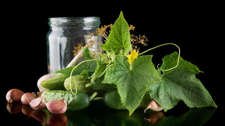 pickling: Gherkins in jar preparate for pickling with flower bud,leaves,jar,garlic,dill flowers and tendrils isolated on black background