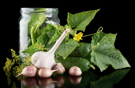 pickling: Cucumbers in jar preparate for pickling with flower bud,leaves,jar,garlic,dill flowers and tendrils isolated on black background