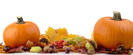 Decoration of pumpkins for thanksgiving day with autumn leaves on white background at the bottom view