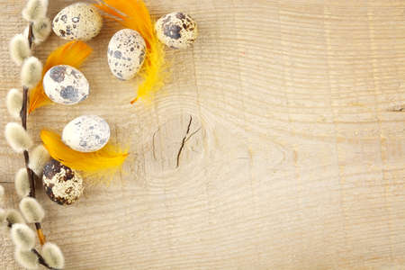 catkins: Blank wooden plank with easter decoration-quail eggs and grey catkins and orange feathers Stock Photo