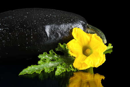 outspreading: Photo of wet zucchini and zucchini flower with leaf on black