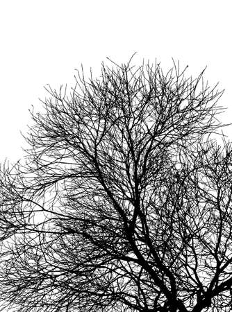 Black silhouette of the tree without leaves on the white background Ilustrace