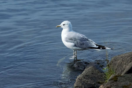 A seagull is standing on a coastal rock