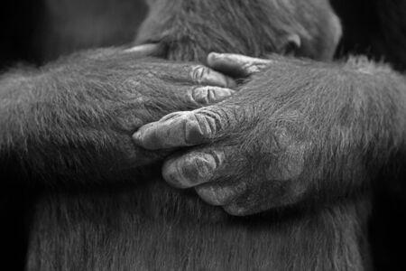 Mother gorilla holds her baby Banco de Imagens