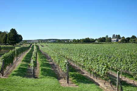 A Long Island vineyard