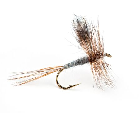 bait: The Adams Dry, worlds most popular dry fly for trout Stock Photo