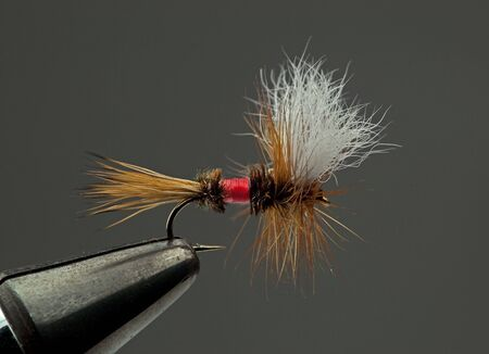 Famous dry fly called a Royal Wulff Stock Photo - 6307867