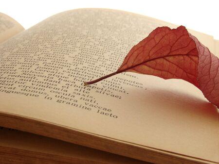 autumnal leaf on the page of ancient poem Banco de Imagens
