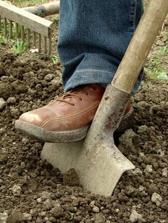 preparing vegetable bed with spade for planting Imagens
