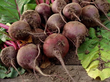 some fresh beetroots with tops