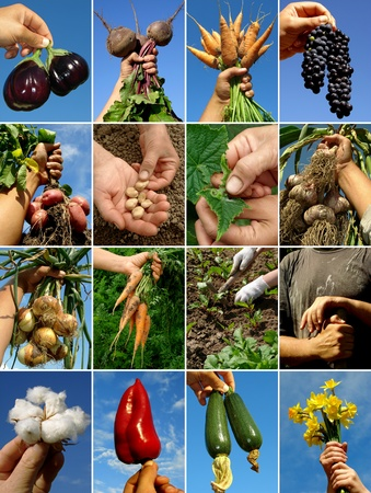 farmer hands with fruits seeds and tools Stock Photo