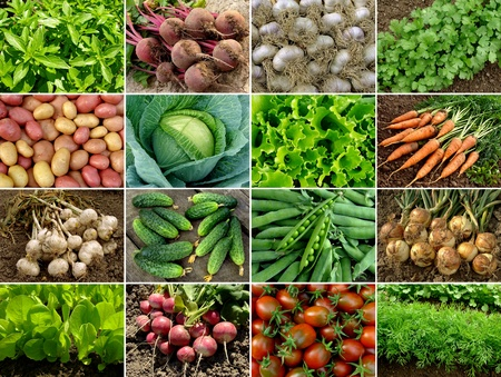 organic vegetables and greens collection
