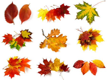 autumnal leaves collection on white