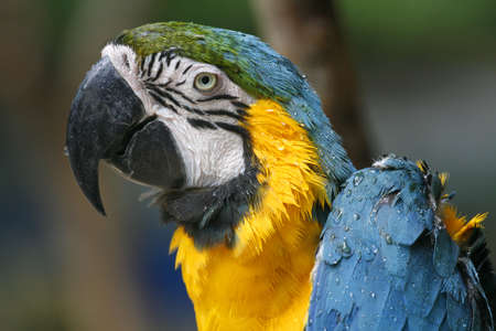 A wet parrot photo