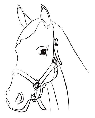 paardenhoofd: Paard hoofd silhouet op wit wordt geïsoleerd