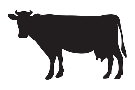 dairy cattle: Cow silhouette isolated on white
