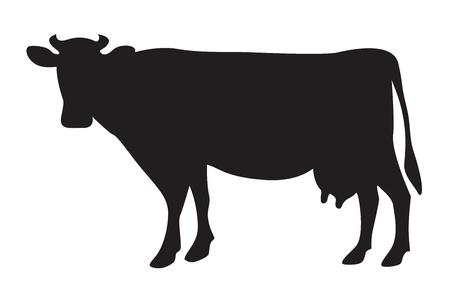 lacteos: Silueta vaca aislado en blanco Vectores
