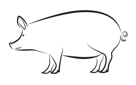 Pig isolated on white  イラスト・ベクター素材