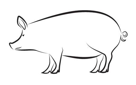 Pig isolated on white Illustration
