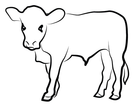 domestic cattle: Calf silhouette isolated on white Illustration