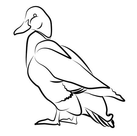 granja avicola: Silueta de pato aislado en blanco